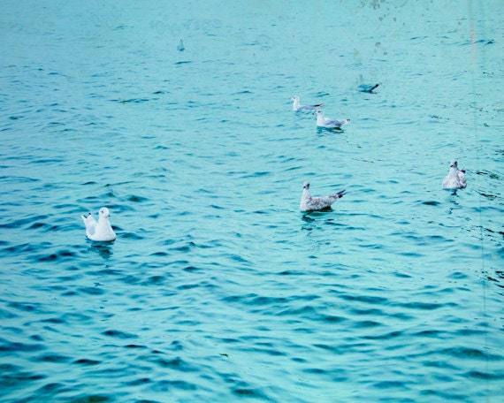Ocean Photo 8x10, Aqua Blue Water and Seagull Print, Summer Nautical Photograph,Neon Beach Photography, Bird Wall Art