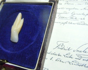 Tooth oddity-  Incisor weird rooth