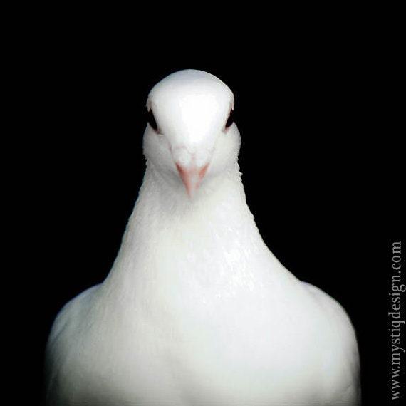 Dove bird peace sign - photo#53