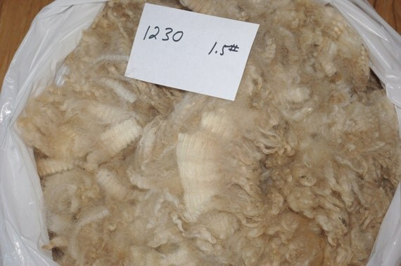 White Romney Raw Wool Lamb Fleece, 1230