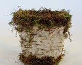 Birch Bark and Moss Planters made from biodegradable material.  Eco friendly.