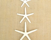 25 pcs. 2  1/2 - 4 in. White Finger Starfish (WHOLESALE) Bulk, Wedding Supplies, Crafts