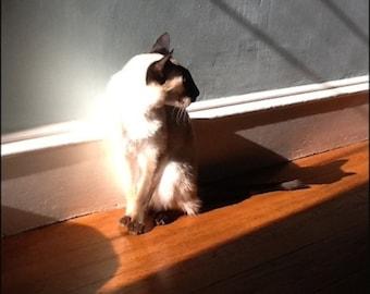 Siamese cat Pearl in the Sunlight, photo art print 8x10 Cat in shadows, elegant home decor art work, office artwork,  light on animals