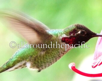 Hummingbirds - Set of 4 Cards with Envelopes