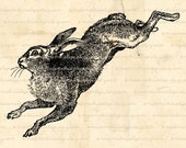 Hare Rabbit Bunny Digital Download for Iron on Transfer, Papercrafts, Pillows, T-Shirts, Tote Bags, Burlap, No 01728