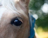 Horse photo, bokeh, close up, eye, animal photography, farm, nature  - 8x10 fine art photograph