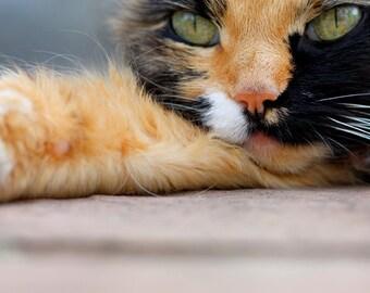 Calico Cat Photo Blank Card