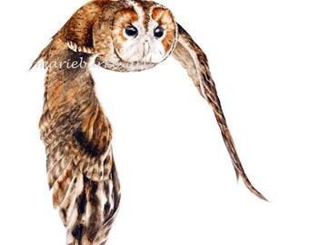 Tawny Owl - fine art print, owl painting, bird painting, owl watercolour