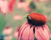 Flower Photo Echinacea Daisy Pink Honeybee--Fine Art Nature Photography 8.5x11