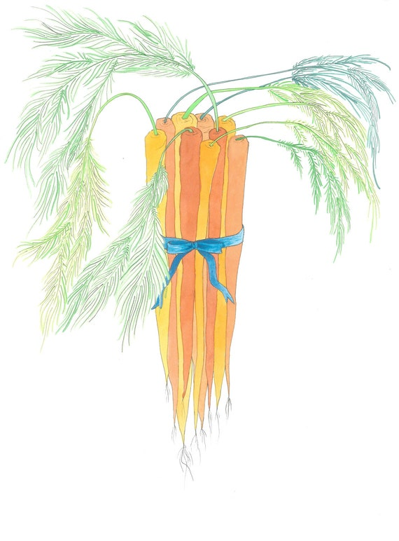 Carrots - original ink and watercolor drawing, painting, illustration
