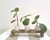 Gift Garden indoors - Wooden Stand with flower pots