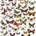 Butterflies Digital Collage Sheet - Scrapbooking Paper - Scrapbook - Blossom Paper Art - 1290