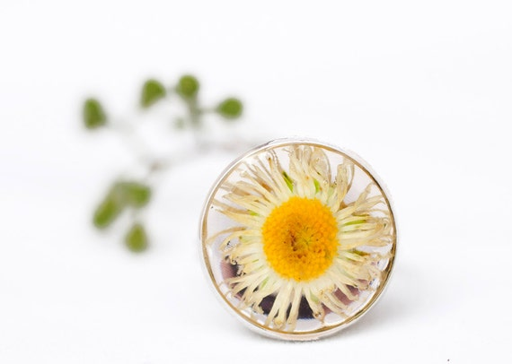 """OOAK """"White Gold"""" Color Nature Ring with Real Daisy Flower 3/4 inch (16mm)"""