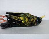 Cabinet Curio 'Death of a Starling' Ceramic Bird Sculpture