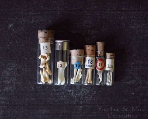 "Vintage ""13"" vials with animal bones for your curiosity cabinet."