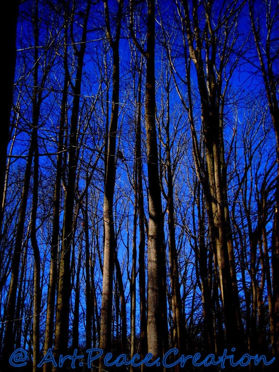 Winter Woods - blue violet sky - tree trunks - halloween - spooky - original nature photography - wall art - 5x7