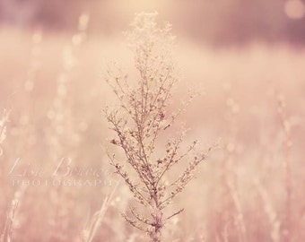 Minimalist, Nature Photography - Pink Field, Dreamy, Bokeh, Muted Pink, Reeds Photograph
