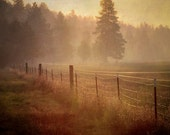 TREES, mist, nature photography print,sunrise,golden, meadow