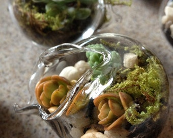 20 Miniature Terrarium Favors