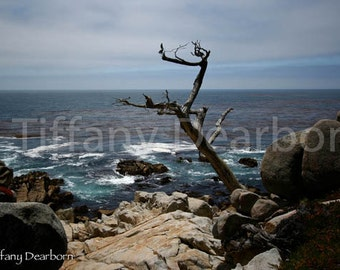 pacific ocean blues - california ocean view w/ bare tree & waves crashing against rocks - painting-esque 8x10 Matte color print