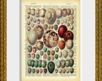 EGGS 05 - old book page art print - upcycled antique dictionary page with an antique egg illustration - vintage home decor - kitchen art