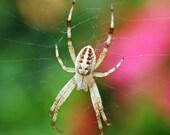 Garden Spider Photo, nature photography, spider on web picture, 5x7 fine art print