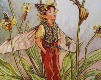 1930s RIBWORT PLANTAIN FAIRY Cicely Mary Barker Print Ideal for Framing