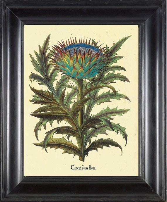 BOTANICAL PRINT Besler 8x10 Botanical Art Print 16 Beautiful Large Wildflower Flower with Antique Writing Spring Garden Wall Decor Picture
