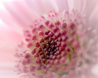Pink Flower Digital Download photo Nursery wall art girls room decor Fine Art Photography pastel photo print wall art