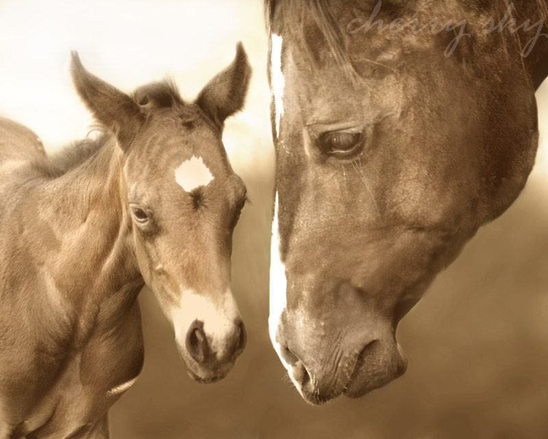 Mother Horse And Foal Mother Horse And Baby Foal