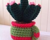 Crochet succulent, evergreen cactus