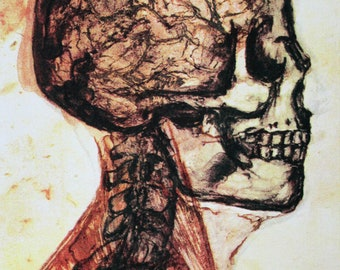 Halloween Skull, Anatomy, Scalp and Neck, Medical Art, Morbid, Lithograph