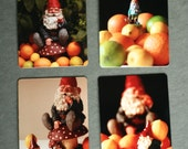 Gnome Magnets: Set of 4 Fine Art Photography