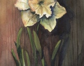 Daffodil in afternoon light. Original watercolor painting.