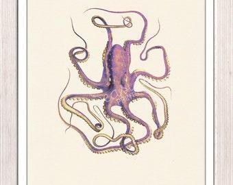 Vintage octopus n 14- sea life print-Marine  sea life illustration A4 print- vintage natural history SPOJ052