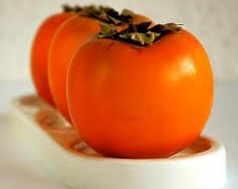 Persimmon Tree, Excellent for Pudding, Baking, Fruit, 10 Seeds, Cheapseeds