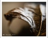 Autumn Leaf Fine Art Print, Soft Brown Fall Leaf, Monochromatic Photo, Macro Still Life, Fall Leaf, Leaf Print, 8x10 Nature Photo Print
