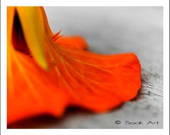 Macro Flower Print, Orange Nasturtium, Orange Flower Print, Monochromatic, Still Life, Close Up 8x10 Fine Art Photo