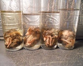 NEW Wet Specimen Baby Quail Embryo Fetus in a Jar ONLY A is left