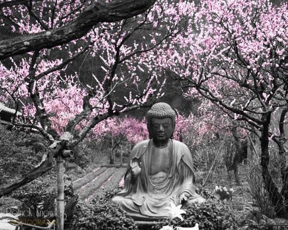 Cherry Blossom Buddha Cherry Blossom Tree 8x10 Japan