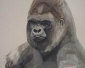 Great Apes: Gorillini- Gorilla portrait