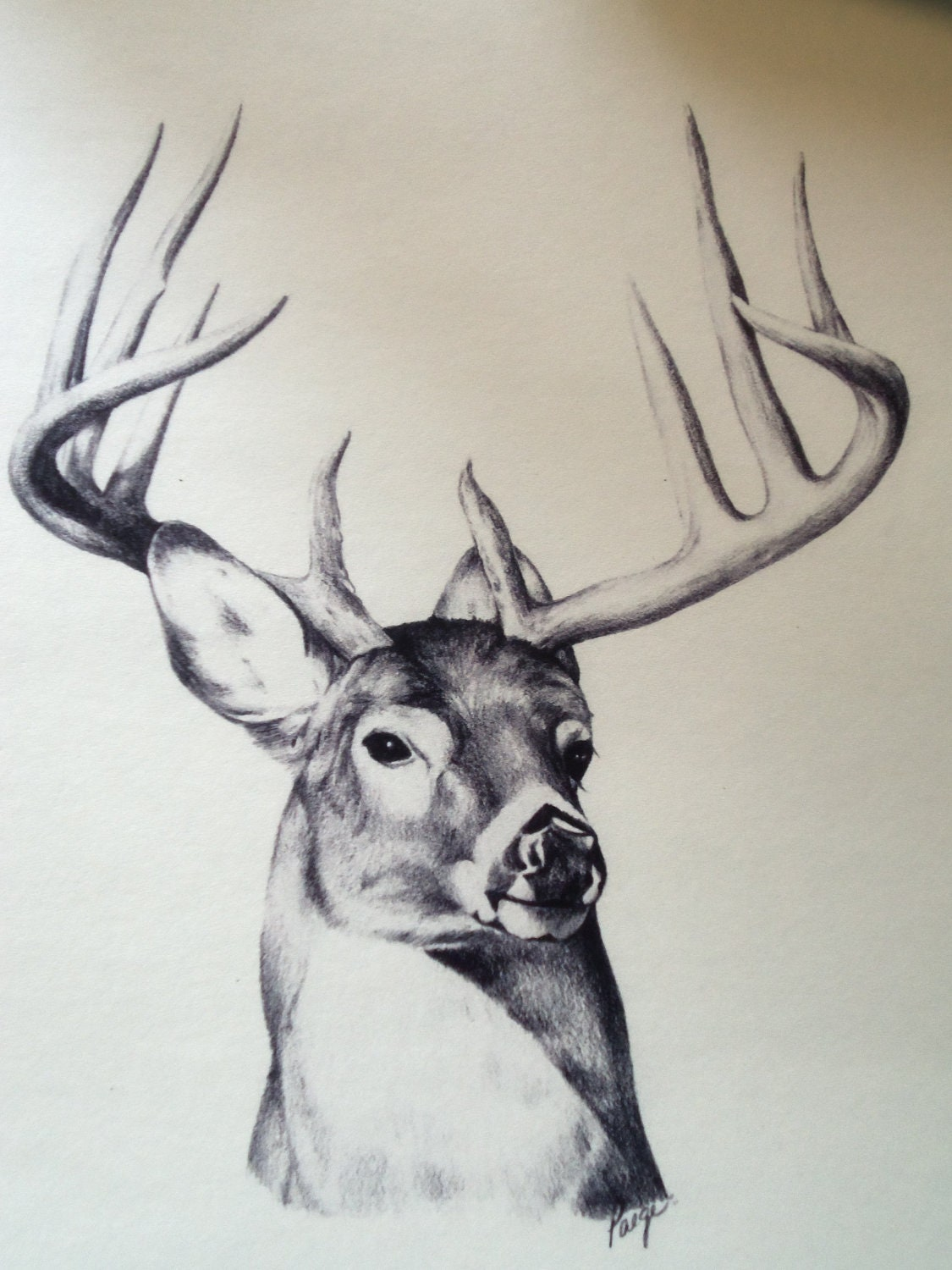 search results for �how to draw a deer for kids
