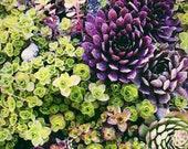 Medley - flower, purple, green, photograph, 8x10, home decor