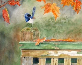 Art Print  on canvas of Blue Wren