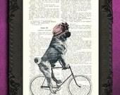 Pug on bicycle pug art pug print pug wall art, pug poster dog decor pink bonnet pug illustration bicycle art dictionary art print