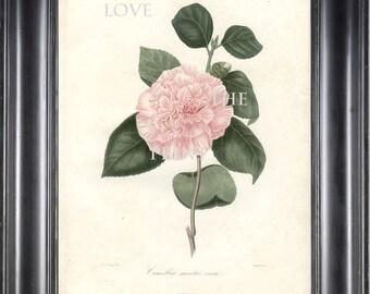 CAMELLIA PRINT Berlese  Art Print 2 Beautiful Sweeth Vera Pink Camellia Flower Garden Nature Botanical Print to Frame