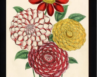 BOTANICAL PRINT Loudon Flower  Botanical Art Print 41 Beautiful Antique Sir Robert Peel Flowers to Frame