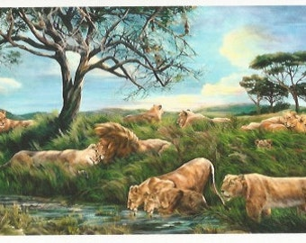 After the Rain - Folding Greeting Card - Lion Pride on the Savannah
