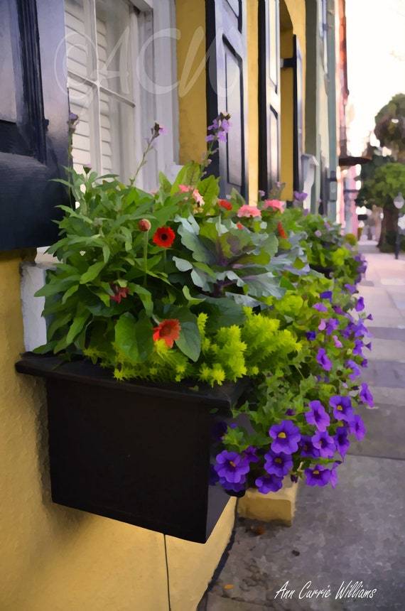 A colorful Window box with flowers (yellow) in  Charleston, South Carolina (16 x 20 canvas)