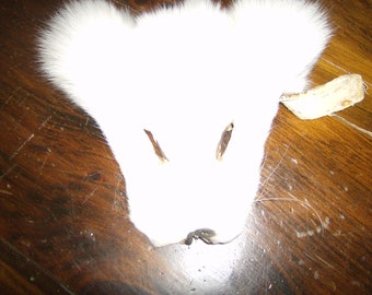 white fox face